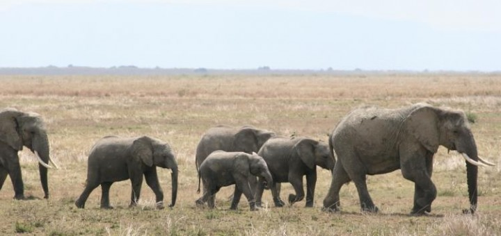 A herd of elephants to learn from