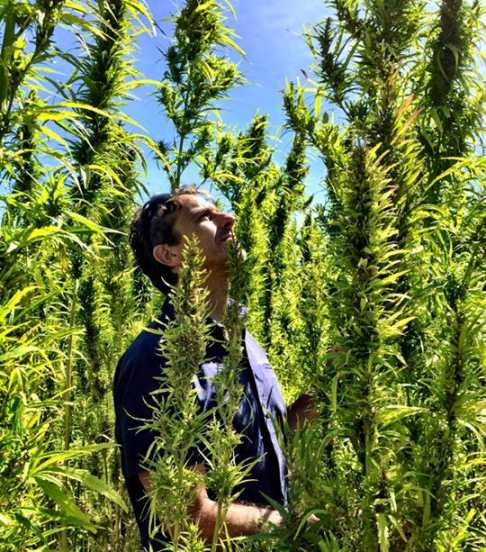 Tony amongst a Hemp Plantation